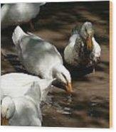 Muddy Ducks Wood Print