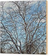 Mulberry Tree In Snow Wood Print
