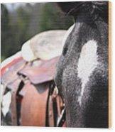 Mule Days Photo Wood Print