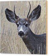 Mule Deer Buck Wood Print