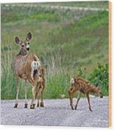 Mule Deer Doe And Twin Fawns Wood Print