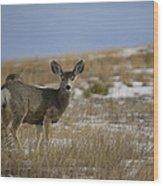 Mule Deer Doe Wood Print