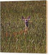 Mule Deer In Wheat Field, Saskatchewan Wood Print