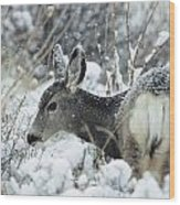 Mule Deer Odocoileus Hemionus In Snow Wood Print