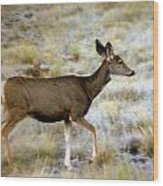Mule Deer On The Move Wood Print