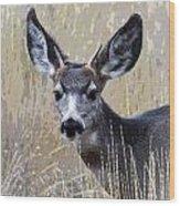 Mule Deer Spike Wood Print