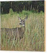 Mule Deer Winthrop Wa 9176 Wood Print