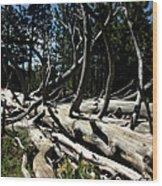 Mules Ear Timber Wood Print