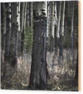 Muleshoe Trees Banff Wood Print