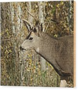 Mulie Buck 3 Wood Print