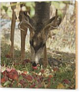 Mulie Buck 4 Wood Print