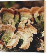 Multi Colored Gill Polypore Fungi 1555 Wood Print