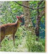 Muntjac Deer - Muntiacus Reevesi Wood Print