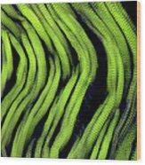 Muscle Fibres, Sem Wood Print