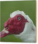 Muscovy Duck Canard Muscovy Wood Print