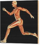 Muscular System Wood Print