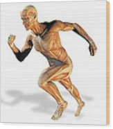 Muscular System Wood Print by Victor Habbick Visions