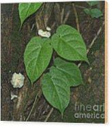 Mushroom Between The Leaves Wood Print