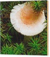 Mushroom Fan Wood Print