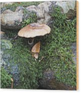 Mushroom In Moss Wood Print