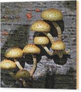 Mushrooms In Relief  Wood Print