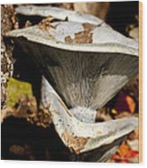 Mushrooms In The Autumn Woods Wood Print by Wilma  Birdwell