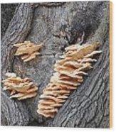 Mushrooms On A Tree Wood Print