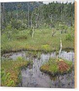 Muskeg Bog With Ponds, Mitkof Island Wood Print