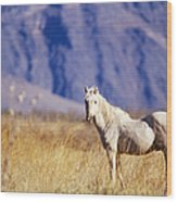 Mustang Wood Print by Mark Newman and Photo Researchers