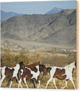 Mustangs Wood Print by Mark Newman and Photo Researchers