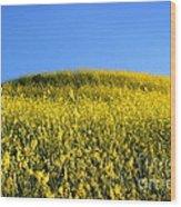 Mustard Grass Wood Print