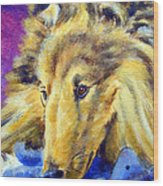 My Blue Teddy - Shetland Sheepdog Wood Print by Lyn Cook