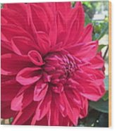 my favorite Dahlia Wood Print