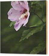 My Little Violet Hibicus Wood Print