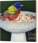 My Painted Bunting Wood Print