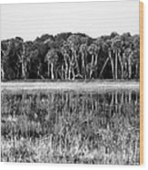 Myakka River Wilderness Wood Print