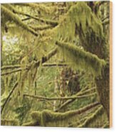 Mysterious Moss Wood Print
