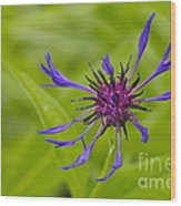 Mystery Wildflower 1 Wood Print