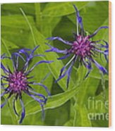Mystery Wildflower 2 Wood Print by Sean Griffin