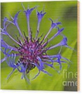 Mystery Wildflower 3 Wood Print by Sean Griffin
