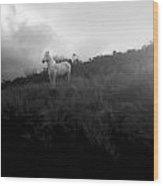 Mystic Horse Wood Print