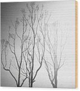 Mystic Trees 1 Wood Print