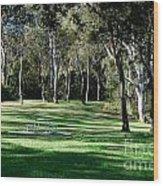 Myuna Bay Picnic Area Wood Print