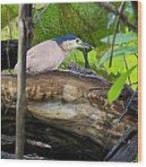 Nankeen Night Heron Wood Print