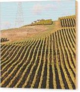 Napa Valley Vineyard . 7d9065 Wood Print
