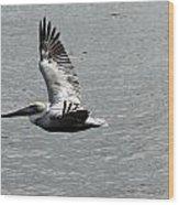 Naples Florida Pelican On The Prowl Wood Print