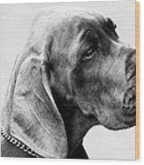 Napoleon Mischief Dog Portrait  Wood Print