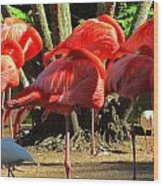 Napping Flamingoes Wood Print