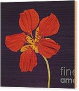 Nasturtium Wood Print