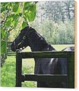 National Stud Farm Ireland Wood Print
